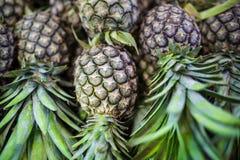 свежие ананасы Стоковое фото RF