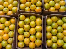 Свежие апельсины в коробках Стоковая Фотография
