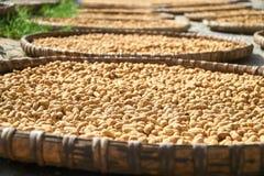 Свежие арахисы покрасили в солнце в традиционных въетнамских корзинах, Phong Nha Ke грохают национальный парк, Вьетнам Стоковая Фотография