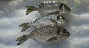 Свежие басовые рыбы на рыбном базаре стоковое фото rf