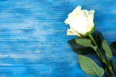 Свежие белые розы на голубой деревянной предпосылке Стоковое фото RF