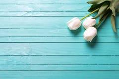 Свежие 3 белых тюльпана на планках бирюзы деревянных Стоковая Фотография