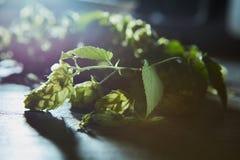 Свежие ветви и конусы зеленого хмеля Стоковое Изображение RF