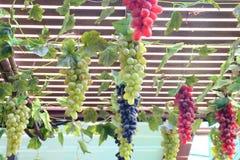 Свежие виноградины с зелеными листьями на лозе свежие фрукты стоковая фотография rf