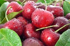Свежие вишни Стоковые Изображения RF