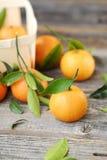 Свежие вкусные tangerines с листьями на деревянном столе Стоковая Фотография RF