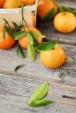 Свежие вкусные tangerines с листьями на деревянном столе Стоковое Фото