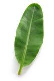 Свежие все лист банана Стоковая Фотография