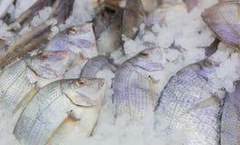 Свежие все рыбы Стоковое фото RF