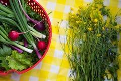 Свежие влажные травы в красном дуршлаге Петрушка, салат, зеленый лук Стоковые Изображения RF