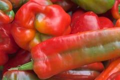 Свежие горячие перцы на дисплее в рынке Стоковое Изображение RF