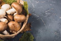 Свежие грибы леса на серой предпосылке стоковые изображения