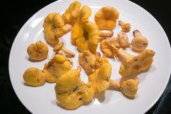 Свежие грибы от forrest Стоковое Изображение