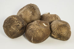 Свежие грибы (разбивочный фокус) Стоковое фото RF