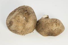 Свежие грибы (разбивочный фокус) Стоковое Изображение