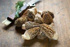 Свежие грибы сморчков Стоковые Фотографии RF