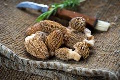 Свежие грибы сморчков Стоковые Изображения