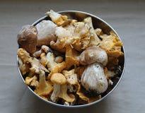 свежие грибы Стоковое Изображение