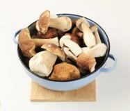 свежие грибы стоковые изображения