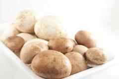 Свежие грибы Стоковые Изображения RF