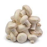 свежие грибы Стоковое фото RF