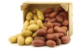 Свежие желтые и красные малые картошки стоковое фото