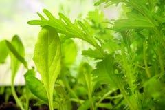 Свежие заводы на зеленом цвете запачкали предпосылку с пирофакелом солнца Стоковые Изображения RF
