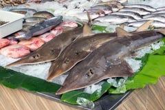 Свежие зацеплять, акулы и рыбы морепродуктов лед для продажи на улице вне ресторана в Пхукете, Таиланде стоковое фото