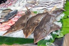 Свежие зацеплять, акулы и рыбы морепродуктов лед для продажи на улице вне ресторана в Пхукете, Таиланде стоковое изображение