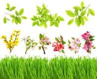 Свежие зеленой цветения цветков травы и весны выходят Стоковая Фотография