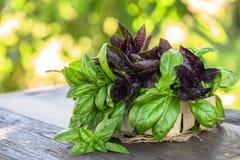 свежие зеленые и красные листья травы базилика смешивают на предпосылке сада Сладостный генуэзский базилик и фиолетовый темный оп стоковая фотография