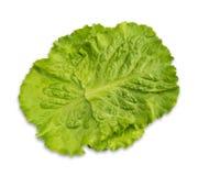 Свежие зеленые листья салата салата Стоковое Изображение RF