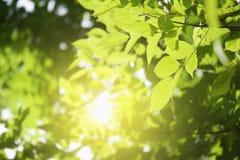 свежие зеленые лист и солнечность Стоковые Изображения