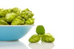 Свежие зеленые плоды хмеля в голубом шаре стоковые изображения rf
