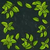 Свежие зеленые предпосылка и рамка базилика Ароматичная варя трава Специя мяса стейка иллюстратор иллюстрации руки чертежа угля щ Стоковое Фото