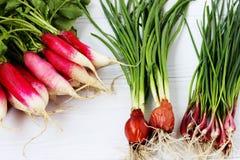 Свежие зеленые цвета весны для салата: редиска и зеленые луки Стоковые Фотографии RF