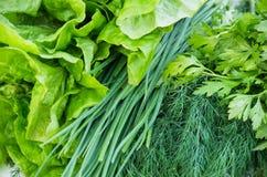 свежие зеленые цвета Стоковое Изображение RF