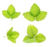Свежие зеленой цветки травы и маргаритки Стоковое фото RF