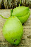 Свежие зеленые кокосы Стоковое Изображение