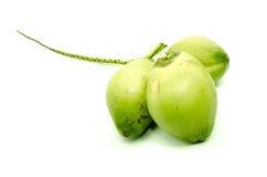 Свежие зеленые кокосы Стоковое Фото