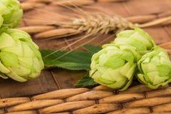 свежие зеленые хмели Стоковые Изображения RF