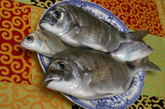 Свежие золотые рыбы Стоковое Изображение
