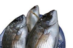 Свежие золотые рыбы Стоковые Изображения RF