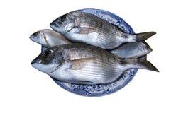 Свежие золотые рыбы Стоковое фото RF