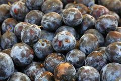 Свежие зрелые голубые сливы закрывают вверх на рынке фермеров Стоковое Изображение RF