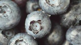 Свежие, зрелые голубые ягоды вращают, одичалая ягода конец вверх видеоматериал