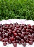 Свежие зрелые вишни на большой овальной плите на предпосылке зеленой травы Стоковые Изображения