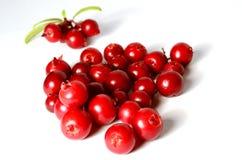 Свежие зрелые клюквы или cowberries на белизне с листьями Стоковые Изображения