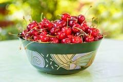 Свежие зрелые органические красные вишни в лете садовничают стоковые фото