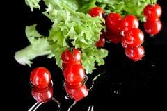 Свежие зрелые томаты вишни с падениями салата и воды изолированные на черноте, концепции овощей сбора Стоковое Изображение RF